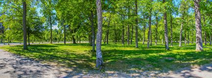 Grove of bright green leafy trees on a warm spring day. Grove of leafy green trees in the gardens of Drottingholm Palace on a bright spring day stock photos