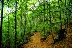 Grove of chestnut trees in Las Medulas Royalty Free Stock Photos
