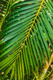 Grove of coconut trees on a sunny day Royalty Free Stock Photos