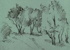 Grove of deciduous trees. Painted graphite pencil at the green background, hand drawn sketch of landscape, vector illustration Royalty Free Stock Photography