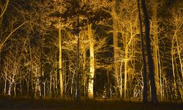 Grove of Illuminated Trees Royalty Free Stock Images