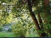 Grove near the river stock image