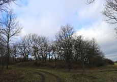 Grove of oak trees in front of sky, mild winter season in Germany at Middlerhine area. View of barren Oak trees along nature trail in hills, mild winter season Royalty Free Stock Images