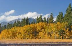 grove osikowa łąka fotografia stock