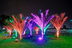Young palm trees at night, lit up with various colors royalty free stock photography