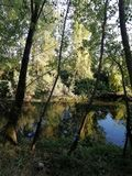 Grove reflecting in the river. With different shades of green royalty free stock images
