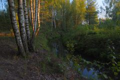 Grove and river during sunset royalty free stock photo