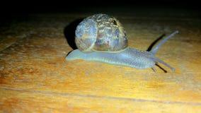 Grove snail on ground Stock Photo