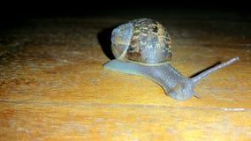 Grove snail on ground Stock Image