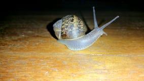 Grove snail on ground Royalty Free Stock Photos