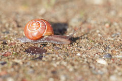 Grove snail on sand Royalty Free Stock Images