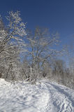 Grove in the snowy forest. Blue sky and sun. Stock Photos