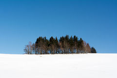 Grove on a snowy hill Stock Photography