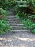Grove Stairs. Stairs in San Francisco's Golden Gate Park Royalty Free Stock Photos
