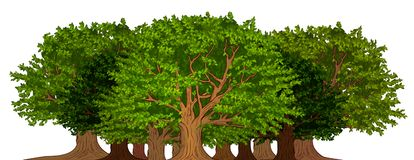 Grove of trees. Illustration of grove of trees on white background royalty free illustration