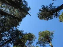 Grove of trees. A grove of trees and blue sky Stock Image