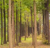 Trees in a straight line Royalty Free Stock Photos
