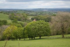 Grove Of Trees In The Welsh Hills stock images