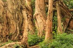 Grove von Bäumen lizenzfreies stockfoto