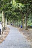 Grove von Bäumen entlang einem gepflasterten Weg in Frankfurt, Deutschland Lizenzfreie Stockbilder