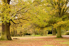 Grovelandspark Royalty-vrije Stock Afbeeldingen