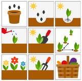 Groving sedlings. Seeds, seedlings and harvest Stock Photography