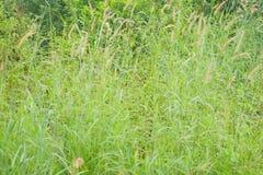Grovt gräs royaltyfria foton