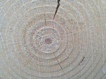 Grovt vitt trä Royaltyfri Fotografi