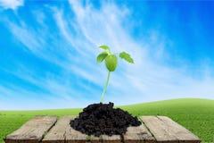 grow stockfotografie