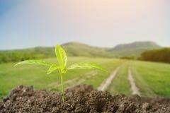 grow stockbilder