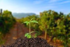 grow stockbild