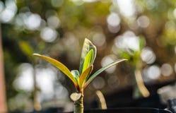 grow lizenzfreie stockfotografie
