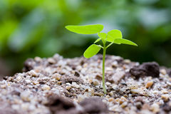 Grow. Macro life near by. It's just weed in dirt Royalty Free Stock Images