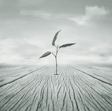 Grow. Beautiful poetic black and white image representing a little branch with leaves that grew escaping from a hole in the floor and cloudy sky in the Royalty Free Stock Photo