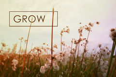 Grow concept quote wildflower background Royalty Free Stock Photography