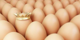 Grow egg row Stock Image