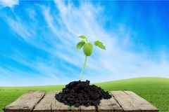 Grow. Ing seed plant soil green tiny Stock Photography
