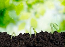 Grow. Ing sprout concept th plant closeup Stock Photo