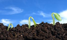 Grow. Ing sprout concept th plant closeup Royalty Free Stock Images