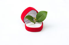 Grow. The love will help generate growth Royalty Free Stock Images