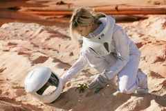 Grow plants on Mars, futuristic astronaut without Royalty Free Stock Image