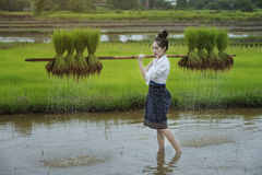 Grow rice. Young farmers grow rice in the rainy season Stock Photography