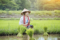 Grow rice. Young farmers grow rice in the rainy season,asian farmers grow rice in the rice field Stock Photos
