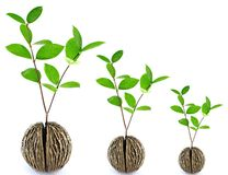 Grow seed. On white background Royalty Free Stock Photography