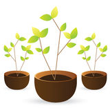 Grow tree green leaves on white background Royalty Free Stock Image