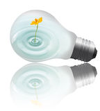Grow up. Yellow flower with water growing inside the light bulb Royalty Free Stock Images