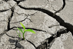 Dry cracked land green shoot,pollution land adversity heal the world new hope life protect environment. Green shoot grow through Dry cracked yellow land,new life stock photos