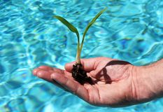 Grow your business. A healthy green plant being held in the palm of a mans hand, suspended over the beautiful aqua swimming suggesting how to grow your busi stock images
