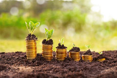 Grow your money faster stock photography