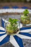 Grow your own celery from scraps. Regrowing celery from left overs Royalty Free Stock Image